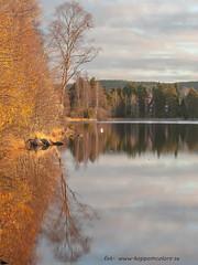 20171103003102 (koppomcolors) Tags: koppomcolors töcksfors värmland varmland sweden sverige scandinavia