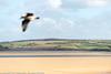A Bird Flies By / Camel Estuary @ Low Tide (Pexpix) Tags: sand cloud bird fields sky estuary weather beach seagull northquay england unitedkingdom gb 攝影發燒友