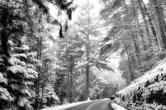 sur la route du Mont Sainte Odile (thierrybalint) Tags: neige nikoniste sapin brume brouillard mont sainteodile