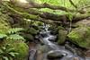 River Meavy, Dartmoor (Sascha Selli) Tags: dartmoor rivermeavy england europe europa uk canon1dsmarkiii