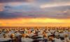 Gannet glow (lizcaldwell72) Tags: hawkesbay sunrise gannets cloud sky capekidnappers wildlife newzealand light