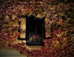 Autumn in Hallstatt (13) (SM Tham) Tags: europe austria salzkammergut hallstatt unescoworldheritagesite town village building wall window ivy plant creeper autumn fall foliage leaves flowerbox geranium