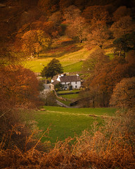Yew Tree Farm (Adam West Photography) Tags: adamwest autumn beatrix beauty bracken cottage cumbria england farm fells fields glen golden grass heritage house hows lakedistrict mary national potter tarn tarnhows tree uk white wood yew color colour