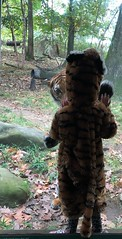 Making New Friends (AndyS03) Tags: tiger tigers cat zoo kid friends cute costume paw child animal halloween
