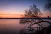 Sunrise Over Madison (pauliefred) Tags: sunrise lake mendota lakemendota capitol wi goldenhour tree uwmadison uw