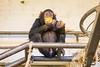 2017-11-14-13h07m32.BL7R2581 (A.J. Haverkamp) Tags: ajani canonef100400mmf4556lisiiusmlens amsterdam noordholland netherlands zoo dierentuin httpwwwartisnl artis thenetherlands chimpansee chimpanzee dob27082013 pobamsterdamthenetherlands kakifruit diospyroskaki nl