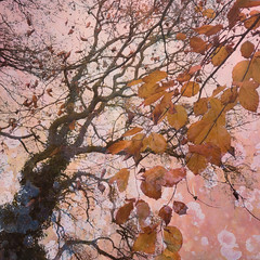 322/365 (Jane Simmonds) Tags: autumn iphone multipleexposure tree lichen leaves 322365 3652017