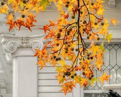 Fall Foliage (clarkcg photography) Tags: fall foliage sweetgumtree sweetgumleaf seed spiny fridayflora 7dwf