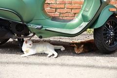 Stray Cats (superzookeeper) Tags: 5dmk4 5dmkiv canoneos5dmarkiv ef2470mmf28liiusm eos digital taiwan hsinchu tw formosa beipu cat catsofflickr catsoftaiwan catsofbeipu oldtownbeipu oldtown free freedom street straycat stray