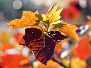 Autumn's hug Goodbye