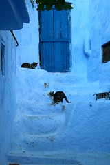 blue for cats (daniel.virella) Tags: cats town chefchaouen chaouen شفشاون maroc marruecos morocco المَغرِب stairs window door blue picmonkey