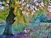 Stadspark (01) Aalst (Johnny Cooman) Tags: aalst vlaanderen belgië bel natuur herfst ベルギー flemishregion flandre flandes flanders flandern belgium belgique belgien belgia autumn flora bélgica aaa flhregion panasonicdmcfz200 oostvlaanderen eastflanders bos forest forêt wald bosque otoño herbst automne tree boom baum arbre stadspark thegalaxy