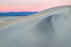 Dune Pink (Kirk Lougheed) Tags: beltofvenus california cottonwoodmountains deathvalley deathvalleynationalpark mesquitedunes mesquiteflat usa unitedstates creosote dawn dune dunes landscape morning nationalpark outdoor park plant sand sanddune sunrise