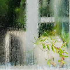 Condensation (v.sellar) Tags: cambridgebotanicgardens abstract