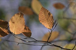 Autumn dance