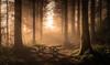 The Picnic bench (jasonhudson2) Tags: trees mist lakedistrict woods bench sony landscape light