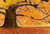 Barbieux ( Nord France ) (Méziane R. Photography) Tags: soleil automne autum couleurs feuilles or fabuleuse