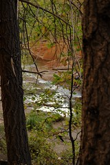 IMG_5623 (schnabelsayegh) Tags: redrock sedona arizona hiking views landscape photography rivers mountains trails leafs fall october screensavers