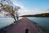 Cortana at Lake Shetek State Park (Tony Webster) Tags: cortana lakeshetekstatepark loonisland minnesota autumn dog fall fallcolors lake currie unitedstates us