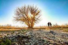 Escarchas Matinales (arapaci67) Tags: otoño naturaleza nature jaen españa tokina canon 12mm frío clima villadelrio puenteromano limite