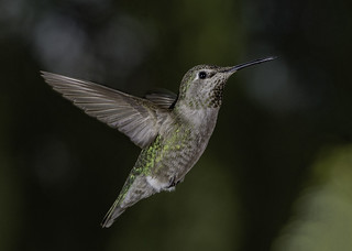 Hunting For Nectar In A Green World