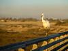 DSC08545-Edit-Edit.jpg (Talulah Bean) Tags: ca nature season lighting bird huntingtonbeach geography us water subject outdoor ocean fall landscape animal autumn