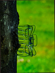 Tree Clippings (Steve Taylor (Photography)) Tags: clip transparent hairclip brown green plastic uk gb england greatbritain unitedkingdom margate tree bark trunk grass grip