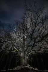 old tree (sami kuosmanen) Tags: suomi sky syksy autumn art europe exposure expression emotion eerie horror finland forest tree tumma travel oak t taivas taide tammi iso bokeh black big valo vanha old outdoor yö nature north night luonto light landscape long