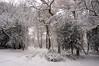 Snow in the Woods (tim ellis) Tags: snow suttonpark holyhurst tree birmingham uk