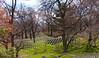 Straight (gabyuchi1) Tags: washington cementery graves america respect green nature align