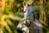 Hey dude -explored- (Sergio '75) Tags: nature natura natur naturaleza naturallight natural naturephotograph naturephotography animals wildlife canon canoneos70d sigma150600mmf563dgoshsmc italy italia camargue cavallo winter explored explore