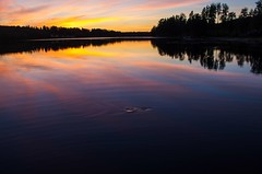 Gone fishing (Stefano Rugolo) Tags: stefanorugolo pentax k5 smcpentaxda1855mmf3556alwr sunset colors gonefishing hälsingland sweden reflection sky silhouette tree ripples landscape water serene dusk wood lake forest ricohimaging
