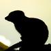 Meerkat+Silhouette