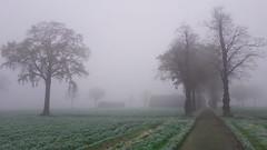 boerderij Wouw (peter.velthoen) Tags: mist boerderij vorst fog frost oldfarm countryside winter platteland gras boom bomen tree trees weg oprijlaan landschap landscape grass