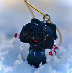 What peppermint stick?  HMM!! (Kreative Capture) Tags: outside snow outdoors macromondays stick macromonday 7dwf hmm scottie dog decoration christmas mini peppermint black texas