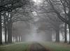 Misty (katrinchen59) Tags: misty foggy fog avenue trees nature branches november nebel nebelig natur naturfotografie allee bäume äste landschaft landschaftsfotografie mist mistig natuur