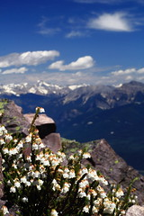 Flowers and Mountains (steveboer.com) Tags: mountain flower landscape rock sky plant outdoors nature snow cloud mountainouslandforms blossom outdoor flora noperson mountainrange top crest travel background mountscenery hill spring peak daylight rocky slope fairweather overlooking petal summer nationalpark view arenaria alps summit scenic tourism scenery valley