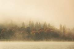 Autumn's Fall (Geolilli) Tags: austria autumn boundary canoe color colorful copyspace europe fall fog foggy forest green lake landscape leaves mist misty mood morning natural nature nobody orange peaceful season shore sky solemn sunrise tree trees water waters winter dawn weather