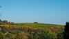 Weinberge in der Pfalz (A.Dragonheart) Tags: landschaft landscape weinberge vineyard grapevine wein vine himmel sky wald forest baum tree sonnenschein sunshine pfalz rheinlandpfalz