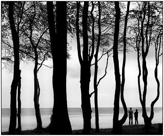 Im Gespensterwald (2)
