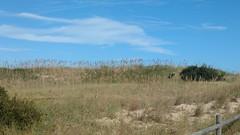Ocracoke Island Outer Banks North Carolina (MisterQque) Tags: ocracokeisland obx outerbanks northcarolina