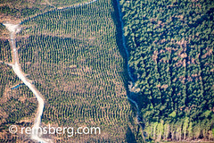 Distinct line divides newly growing saplings and mature trees, North Carolina (Remsberg Photos) Tags: aerial woodlands vegetation trees warmth windy growth comparison clearing neat rebirth clearance saplings mature none northcarolina usa