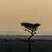 African Safari. Savanna at dusk.