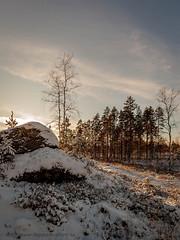 20171119003936 (koppomcolors) Tags: koppomcolors forest skog snow snö värmland varmland vinter winter