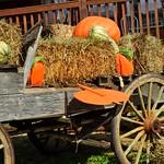 0513ex  autumn harvest thumbnail