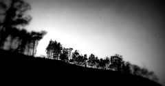 BLURRED TREES (Lani Elliott) Tags: nature naturephotography lanielliott landscape field trees sky blackandwhite bw monochrome scene scenic scenictasmania blurred mist misty mood moody grey sundaylights fantastic superb beautiful wonderful