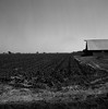 San Joaquin Valley (bingley0522) Tags: rolleiflexautomatmxevs carlzeisstessar75mmf35 yellowfilter trix diafine epsonv500scanner sanjoaquinvalley centralvalley ruralcalifornia jacktoneroad autaut