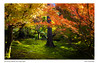 0S4A4946-P (ImagesSansWords) Tags: canon5dmarkiv damoophotography kyoto japan autumn autumnfoliage fallfoliage fallcolors colors nature mapleleaves fourseasons mapleleavesinfall autumncolorskyoto autumncolors