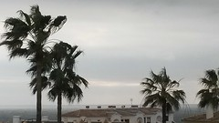 20170202_140638 (rugby#9) Tags: andalucia spain costadelsol fuengirola clublacosta holiday complex palmtrees palm trees cloud clouds plant palmtree outdoor pueblomarina apartment apartments greysky windy water landscape