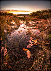 Marsh (ronnymariano) Tags: morning harrimanstatepark fisheye nature sunrise city sun unitedstates landscape newyork 2016 stonypoint us